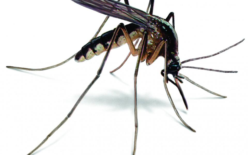 mosquito-illustration_2092x1660